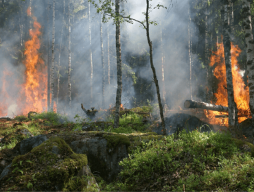 zbiórka na usuwanie skutków pożaru w biebrzańskim parku narodowym